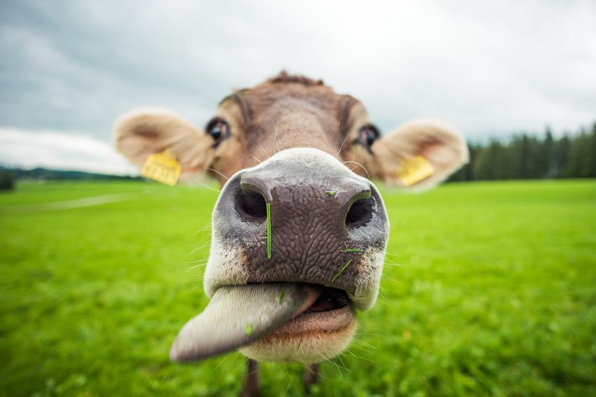 Gesünder ohne Milch
